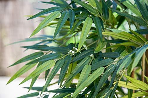 Maia Shop Bambusbaum mit Natürlichem Schilf, ideal für die Innendekoration, Baum, Künstliche Pflanze (180 cm), Bamboo - 5