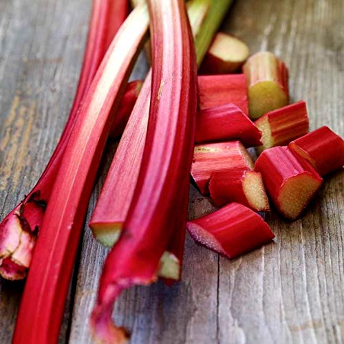 Rhubarb Seeds for Planting Pie Plant Rheum Australe About 50 Seeds