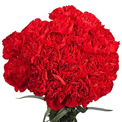 100 Red Carnations- Lovely Fresh Flowers from Globalrose