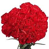 100 Red Carnations- Lovely Fresh Flowers