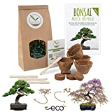 Bonsai Kit incl. eBook GRATUITO - Set con macetas de coco, semillas y tierra - idea de regalo...