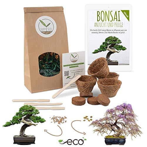 Bonsai Kit incl. eBook GRATUITO - Set con macetas de coco, semillas y tierra - idea de regalo sostenible para los amantes de las plantas (Wisteria + Pino Australiano)