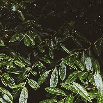 Ultimate Spring Rain Album for a Peaceful Deep Sleep