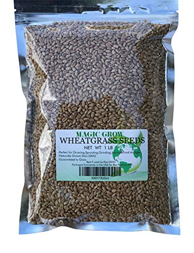 Wheat Grass Seed 1lb - Guaranteed to Grow