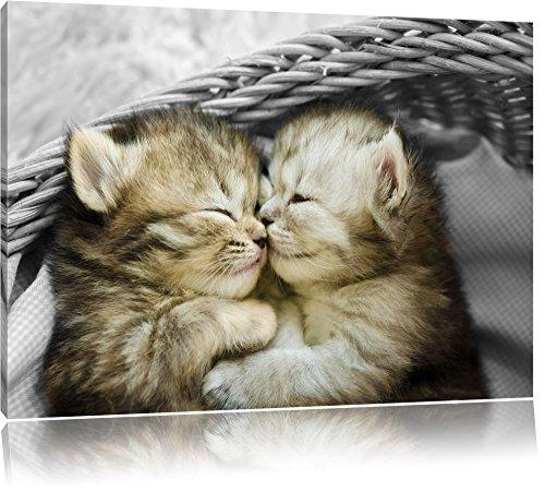 Zwei süße Babykatzen im Korb schwarz/weiß Format: 60x40 auf Leinwand, XXL riesige Bilder fertig gerahmt mit Keilrahmen, Kunstdruck auf Wandbild mit Rahmen, günstiger als Gemälde oder Ölbild, kein Poster oder Plakat