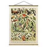 Stoffbild Posterleisten Vintage Lehrtafel Vögel Hochformat