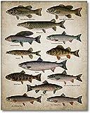 キャンバスアートペインティング70x90cmフレームなし角度壁アートポスタープリント魚の品種絵画淡水魚の壁の写真ホームルームの装飾用