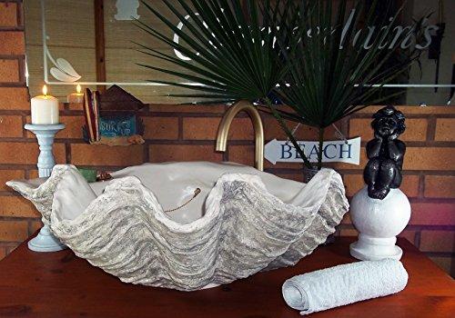 Giant Muschel Waschbecken Waschbecken Aufsatzwaschbecken Handskulptur Treibholz gedämpft Grau 70 cm breit verchromte Beschläge