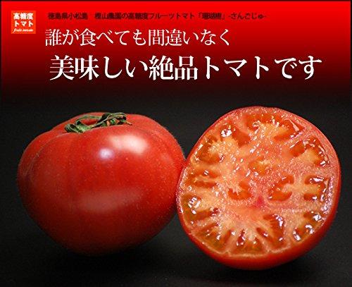 母の日 早割 糖度10度以上珊瑚樹(さんごじゅ)トマト 1kg S特選 フルーツトマト 無農薬 産地直送 無農薬 6月中旬頃まで