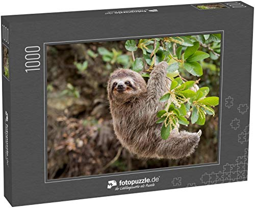 Puzzle 1000 Teile Gewöhnliches Faultier im Dschungel - Klassische Puzzle mit edler Motiv-Schachtel, Fotopuzzle-Kollektion 'Tiere'