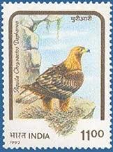 Birds of Prey- Himalayan Golden Eagle Bird, Himalayan Golden Eagle, Aquila chrysaetos Indian Stamp