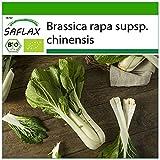 SAFLAX - BIO - Cavolo senape cinese - Pak Choi - 300 semi - Brassica rapa supsp. chinensis