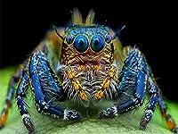 ジグソーパズル 500ピース 大人用 ハエトリグモ マクロ昆虫 パズル 教育ゲーム 家の装飾 パズル (52x38cm)
