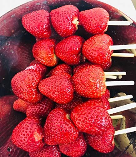 果物屋さんの徳島産 いちごスティック(冷凍) LLサイズいちご棒、苺串、 いちごキャンディー、冷凍いちご 8本入り/箱 国産赤肉メロン美味しさをそのままお届けします!【送料、消費税込み】