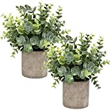 Flojery Mini plantas artificiales en macetas de eucalipto con hierbas de imitación en macetas, plantas pequeñas de 21-23 cm de altura para decoración de mesa interior (spray de eucalipto)