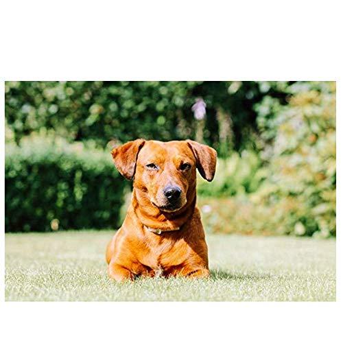 NOBRAND txtnt Rompecabezas de 1000 Piezas para Adultos Raza de Animal Adorable Decoración de ensamblaje de Madera para el Juego de Juguetes para el hogar Explore y resuelva Problemas