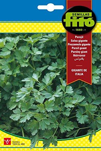 graines fitó 3777 – Persil géant Italien