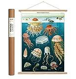 Cavallini Papers & Co., Inc. Ozeanographie-Poster und