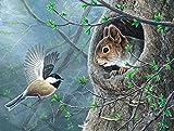 Xofjje Pintar por Numeros_Animales Conejos y Aves_AdultosDIY Pintura por números_Pinceles y Pinturas Decoraciones para el Hogar_30x40cm_Sin Marco