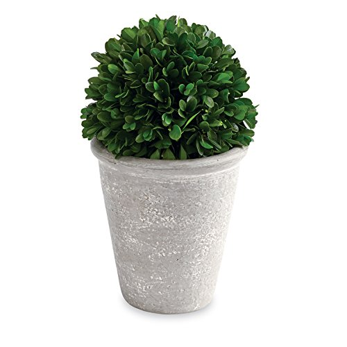 Mud Pie Preserved Boxwood Topiary Ball, Green, Gray