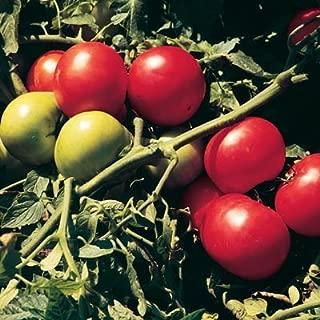 supersonic tomato