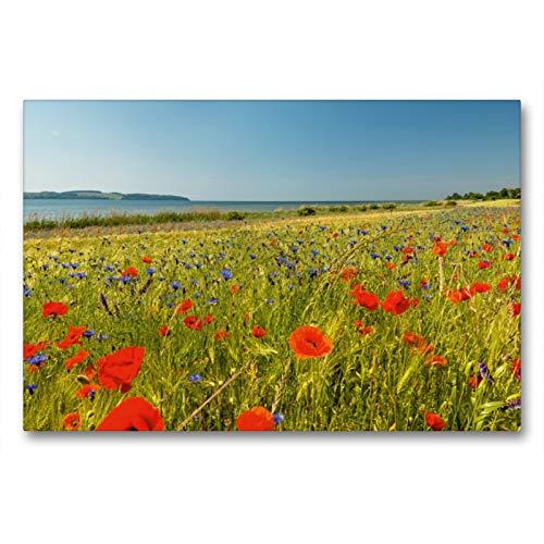 CALVENDO Premium Textil-Leinwand 90 x 60 cm Quer-Format Mohnfeld Mönchgut, Leinwanddruck von Nordbilder Fotografie aus Leidenschaft