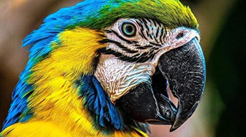 Erwachsene Kinder Holzpuzzle 1000 Stück Muster Papageienschnabel Intellektuelle Entwicklung Freundschaft Geschenk Freizeit Unterhaltung Party Dekoration
