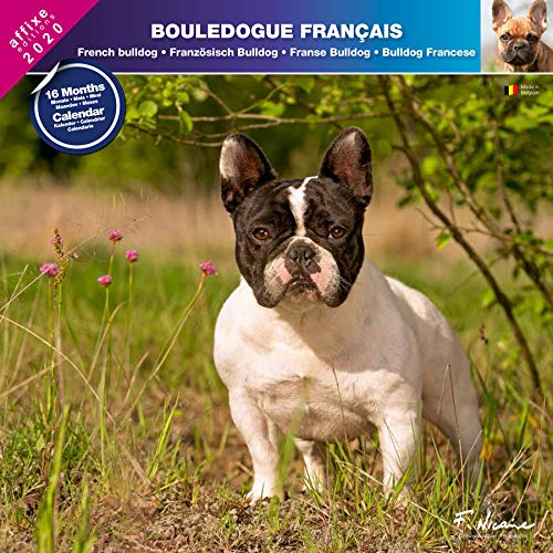 Franse kaars 2020 - kalender AFFIXE (FRENCH BulldoG)
