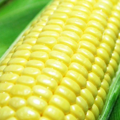 とうもろこし きみひめ 5本 スイートコーン 最大糖度19度 生で食べられる 山梨県産 農家直送