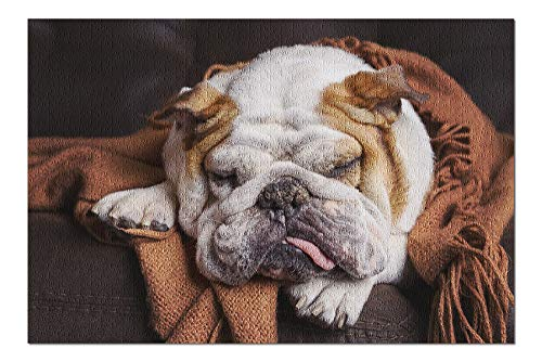 English Bulldog Sleeping on Couch Photography A-90753 (Premium 1000 Piece Jigsaw Puzzle for Adults, 18x24, Made in USA!)