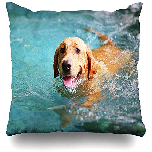 Throw Pillow Case 45x45 cm Fur Labrador Retriever Large Happy Dog Swimming Animals Wildlife Pet Parks Excited Outside Outdoor Cushion Cover