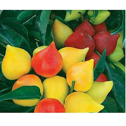 Shopmeeko Echte Zierfrucht Bonsai Pfeffer, Pfirsich Zierpfeffer, Zierpfeffer Pflanzen, etwa 100 Partikel