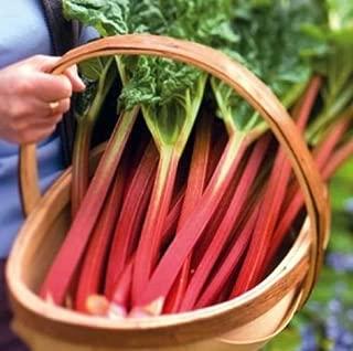 Sow No GMO Rhubarb Victoria Non GMO Heirloom Garden Vegetable 15 Seeds