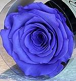 Rose éternelle stabilisée Violette
