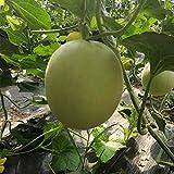 300 semillas de melón, champiñones, semillas de melón, melón de piel gruesa, semillas de melón dulce