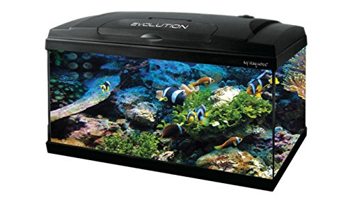Haquoss Evolution 60 Acquario 60X30X45H cm, 52 Litri, con luce a led 7,5watt, completamente accessoriato, nero