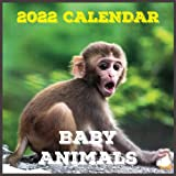 Baby Animals Calendar 2022: Daily, Weekly and Monthly Planner   Baby Animals 2021-2022 Planner   Baby Animals Calendar and Organizer   small calendar