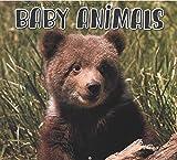 Wandkalender 2020 Baby Tiere 16 Monate