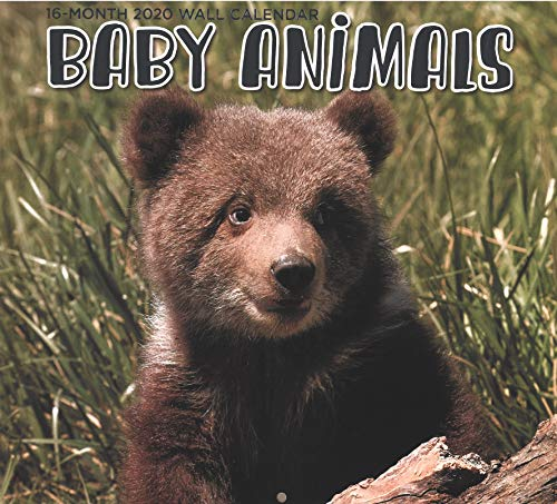 2020 Baby Animals Full-Size Wall Calendar, 16-Month