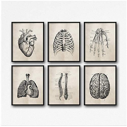 cgsmvp Menschliche Anatomie Wissenschaft Vintage Poster Kunstdrucke, Medizinische Anatomie Leinwand Gemälde Arzt Klinik Wandbilder Dekor-30x40cmx6Pcs-Kein Rahmen