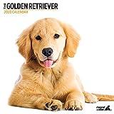 Kalender 2020 Golden Retriever Modern