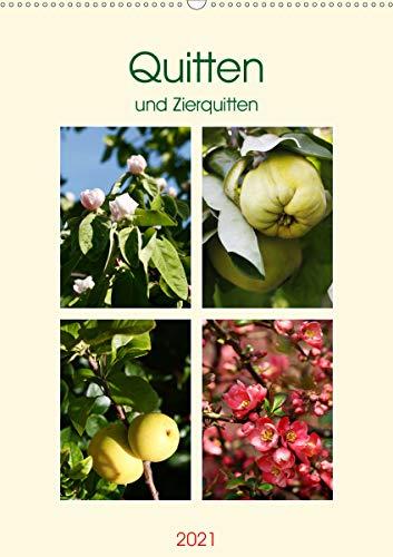 Quitten und Zierquitten (Wandkalender...