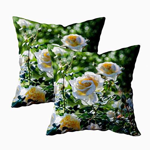 Funda de almohada, 2 paquetes de fundas de almohada, cojín Douecilsh, sofá suave para el hogar, rosa decorativa My Girl Las rosas son de color blanco amarillo crecen en el jardín iluminadas por el sol