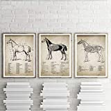 None brand Vintage Pferd Anatomie Leinwand Poster Drucken
