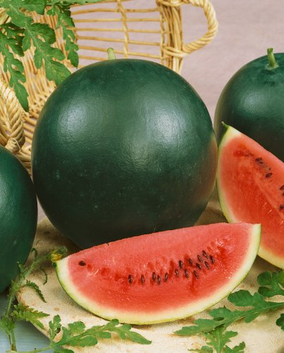 100 Sugar Baby Watermelon Seeds for The Price of 50!