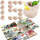 DinoMax 15 Dinosaur Eggs Excavation Kit - Bulk Dig and Hatch Dino Models Toy Gift for Ages 3 4 5 6 7 8 9 10 Year Old Kids, Fun Educational Digging STEM Activity Learning Set for Boys and Girls