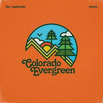 Colorado Evergreen