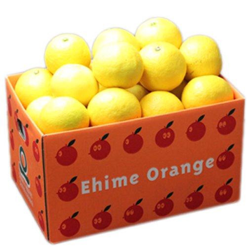 「お試し小夏3」お試し品愛媛ニューサマーオレンジ(小夏)3kg フルーツ 果物 通販