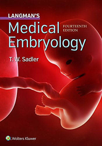 Compare Textbook Prices for Langman's Medical Embryology 14 Edition ISBN 9781496383907 by Sadler PhD, Dr. T.W.