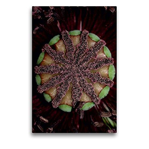 CALVENDO Premium Textil-Leinwand 50 x 75 cm Hoch-Format Die Narbe, Leinwanddruck von Brigitte Deus-Neumann